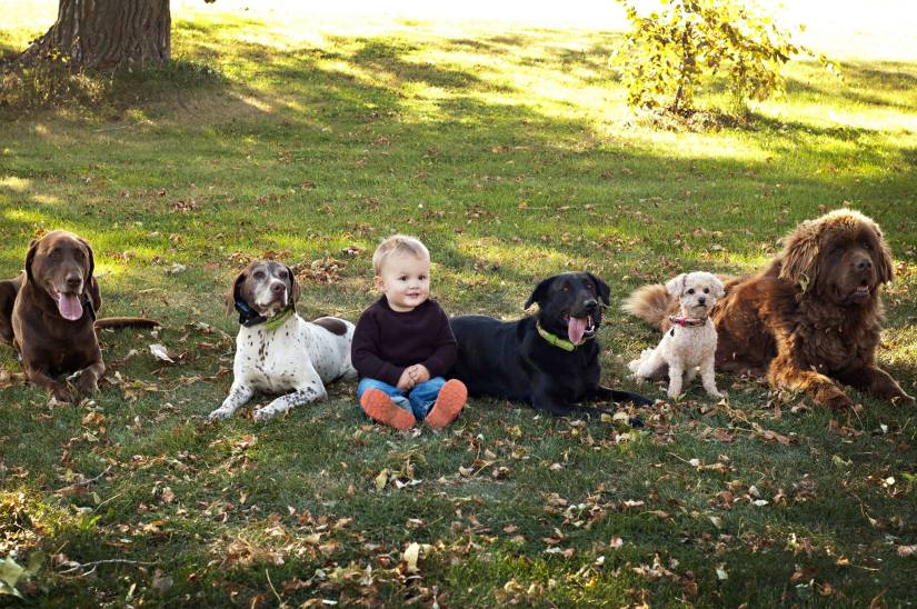 Kiddo and dogs