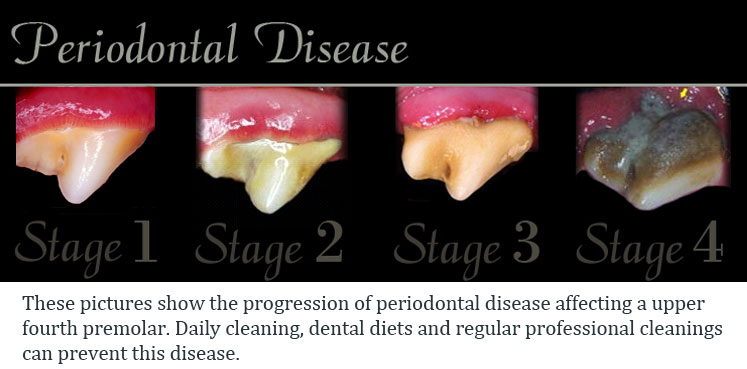all-pets-dental-periodontaldisease-static