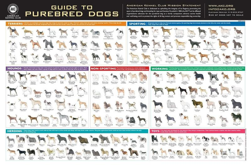 AKC Breed Poster Guide to Purebred dogs.jpg